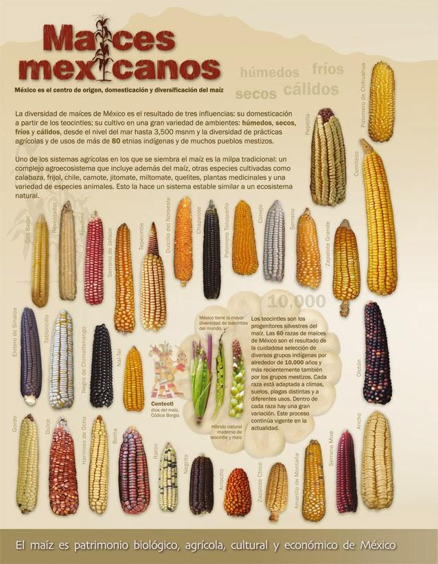 cuna del maíz
